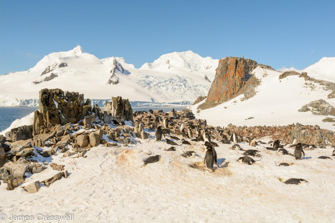 A photograph of  a chinstrap penguin colony on Half-Moon Island with Livingston Island in the background, South Shetland Islands, Antarctica, taken on a PolarWorld Travel expedition cruise