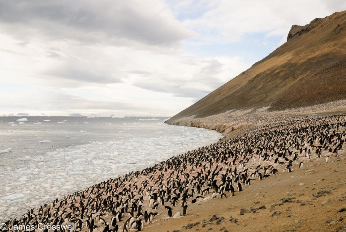 A photograph of a colony of Adelie penguins on Devil Island, Weddell Sea, Antarctica, taken on a PolarWorld Travel expedition cruise